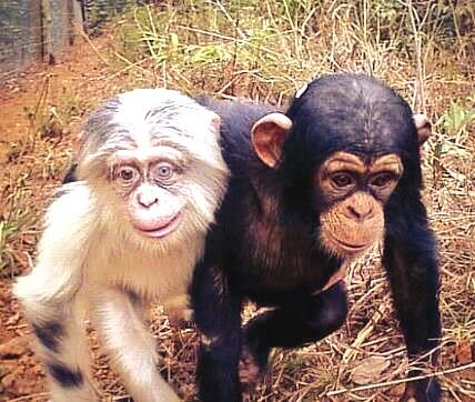 Gareth Bale and his grandad