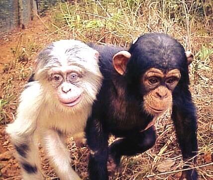 Gareth Bale and his grandad